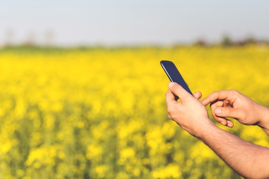 A phone being held above a wheat field